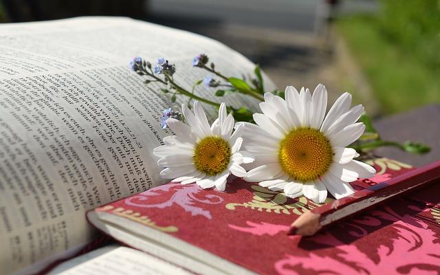 writing_daisies