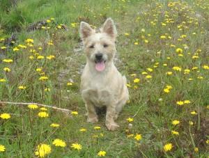 Maisie-in-the-field-300x227